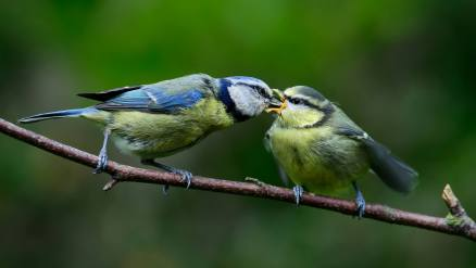 Birds - by Chris Connel